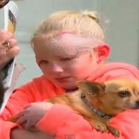 Plus fort que Batman, un chihuahua sauve une petite fille face à un pitbull