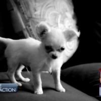 Nabilla Benattia (Les Anges 5) : l'enquête délirante du Petit Journal sur la mort de son chien
