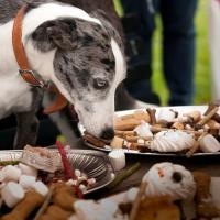 Soldes 2013 : une garderie grand luxe gratuite pour les chiens au BHV