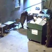 Etats-Unis : un restaurant volé par... un ours ! L'incroyable vidéo