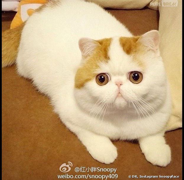 White Bug Eyed Cat