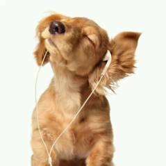 Miley Cyrus, Aluna George, Little Mix, Talisco ... Playlist #21 : dans les oreilles de la rédac cette semaine