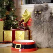 Grumpy Cat, Colonel Meow... Noël avant l'heure avec les chats stars du web