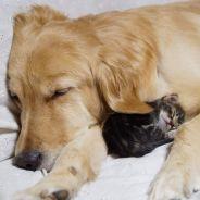 [CUTE] Ce chaton et ce chien vont ensoleiller votre lundi