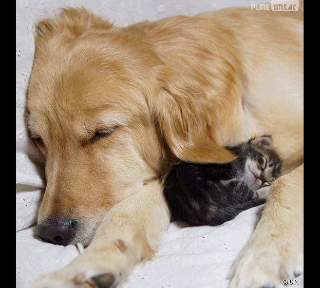 Ce chaton et ce chien vont ensoleiller votre lundi