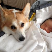 [VIDÉO] Quand les chiens protègent les bébés : la compilation méga cute du jour