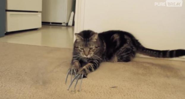 X-Men : on a trouvé le chat de Wolverine