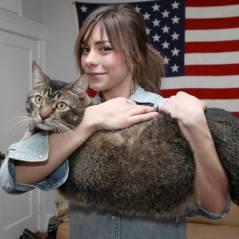 [WTF] Voici Pickles, bientôt le chat le plus grand du monde