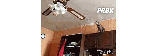 chute de chat