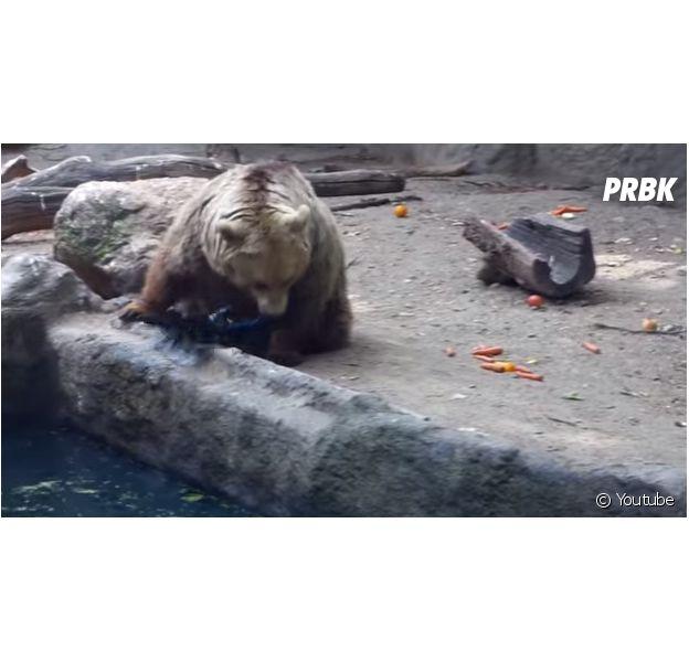 Un ours sauve un oiseau de la noyade dans un zoo de budapest en juin 2014