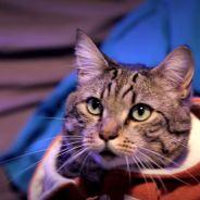 """Winston : le chat """"love coach"""" et délirant des Youtubers de WonderFools"""