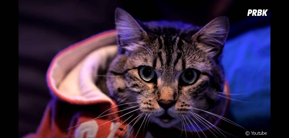Winston : le chat le plus cool du net