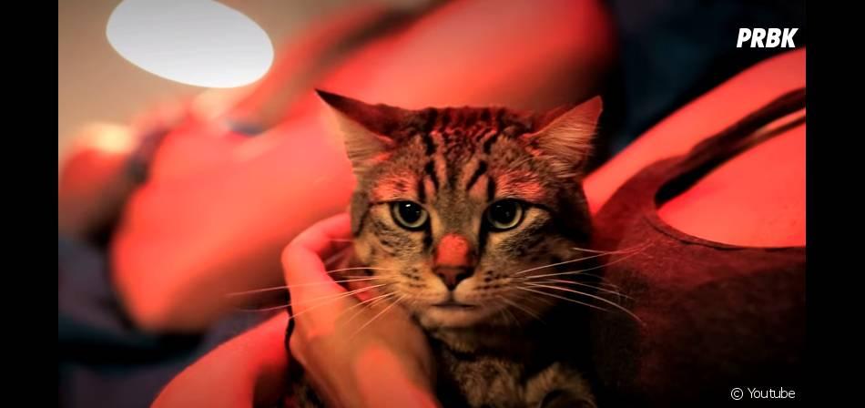 Winston : un chat très spécial mais délirant