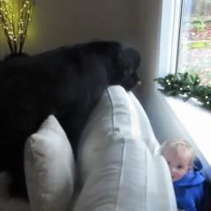 Le cache-cache adorable d'un chien géant et d'une petite fille