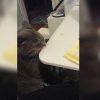 Fail : ce chat a une réaction très étrange quand on lui gratte le c...