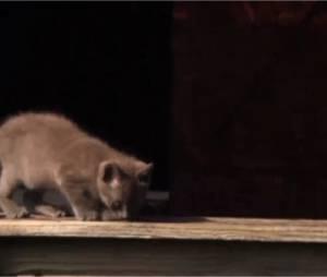 L'Amour est dans le pré 10 : un chaton chute pendant la diffusion des portraits, le 5 janvier 2015 sur M6