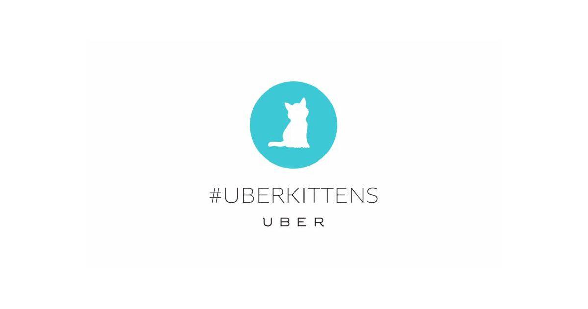 uberkittens le service de livraison de chatons d 39 uber