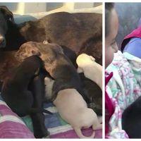 Extraordinaire : pour sauver ses neuf chiots d'un incendie, une chienne a eu une idée de génie