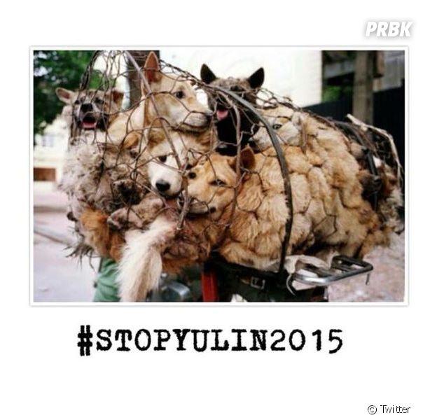 #StopYuLin2015 : le monde se mobilise pour arrêter le massacre des chats et des chiens en Chine