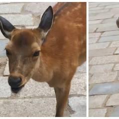 WTF : ce cerf fait les bruits les plus bizarres du monde