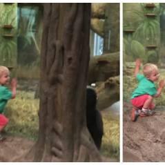 Trop cute : un enfant de 2 ans et un gorille jouent à cache-cache
