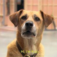 Under the Dome saison 3 : la belle histoire de Kato aka Indy, le chien de Big Jim