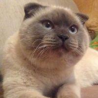 Insolite : Barsik le chat, bientôt élu maire dans une ville de Russie ?