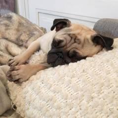 EnjoyPhoenix rassure ses fans : son petit chien Jelly va mieux !