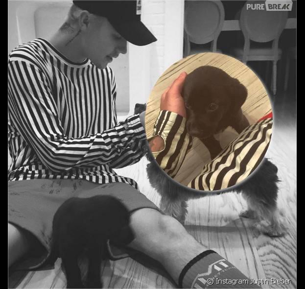Justin Bieber présente Phil, son nouveau chien, sur Instagram