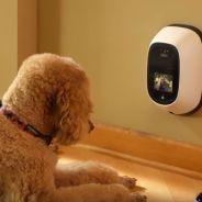 Voici le Skype pour parler à votre chien ou chat quand il est seul chez vous 🙌