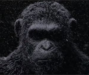 La Planète des singes 3 : le premier teaser