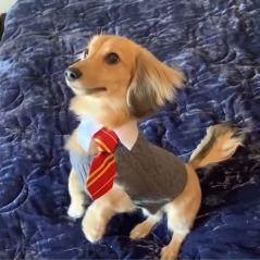 Harry Potter : ce chien répond aux sorts magiques et c'est vraiment trop cute 😍