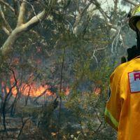 Incendies en Australie : Ecosia reverse 100% de ses bénéfices du jour pour replanter des arbres