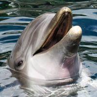 La captivité des animaux marins comparée au confinement : les 8 choses à savoir avec PETA