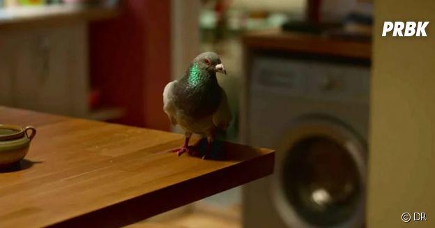 Mon amie Adèle : le pigeon de l'épisode 6 est-il Louise ?