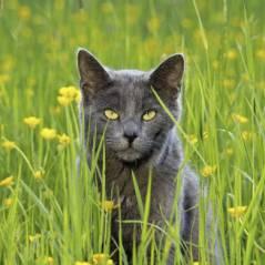 Le chat : animal de compagnie le jour, serial-killer la nuit !