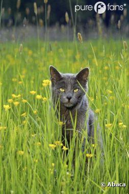 Le chat tue des milliards d'oiseaux par an