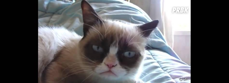 Grumpy Cat bientôt star de cinéma ?