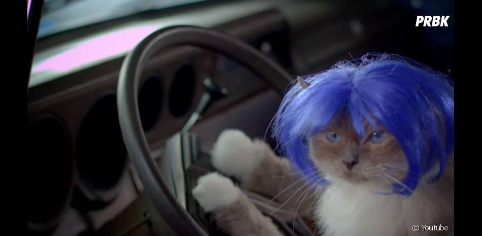 La dernière publicité de la marque Popchips met en scène des chats à perruque