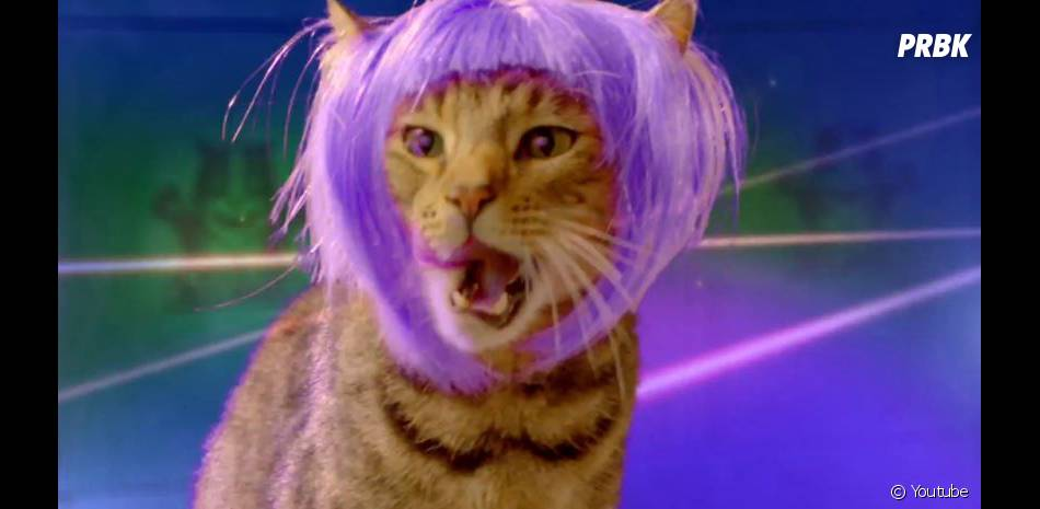 Des chats à perruque dans la dernière publicité déjantée de Popchips avec Katy Perry en guest