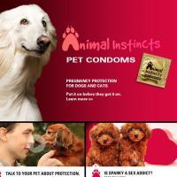 Quand les Américains inventent les préservatifs pour chiens et chats