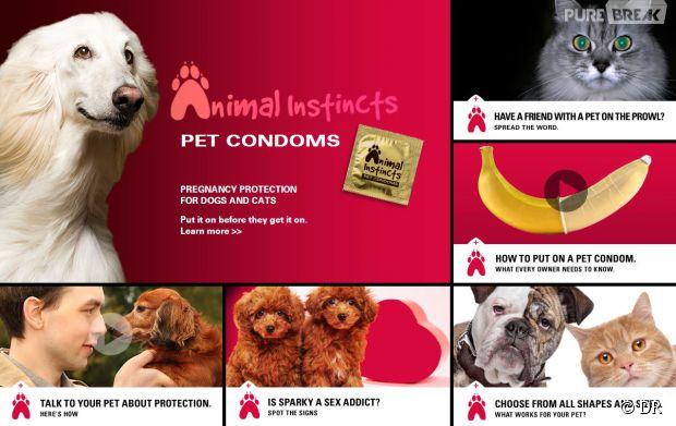 quand les am ricains inventent les pr servatifs pour chiens et chats. Black Bedroom Furniture Sets. Home Design Ideas