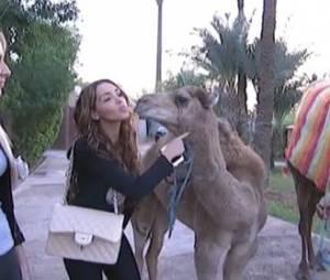 Allo Nabilla : Nabilla Benattia et Anaïs rencontrent deux dromadaires