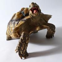 Une tortue bat un lapin lors d'une compétition de ski