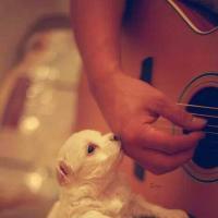 Lorde, Foster The People, Shakira, Isaac Delusion... Playlist #30 : dans les oreilles de la rédac cette semaine