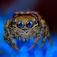[CUTE] Vous n'aurez plus jamais peur des araignées grâce à ces photos