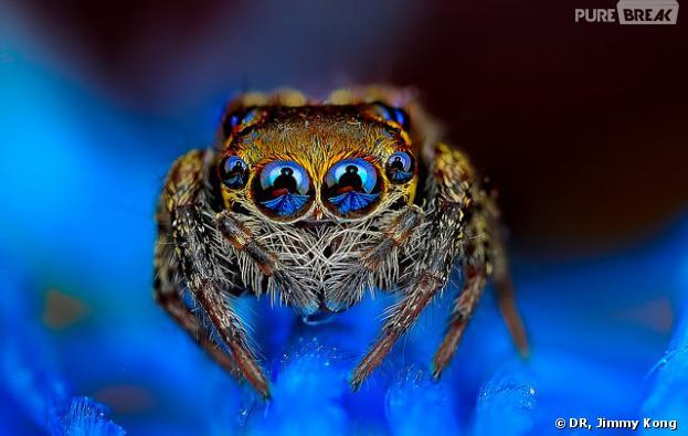 Les araignées de Jimmy Kong sont fascinantes