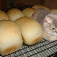 [PHOTOS] Les 20 chats les plus nuls à cache-cache