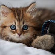 [PHOTOS] Arrêtez tout : voici Daisy, le chat le plus mignon d'internet