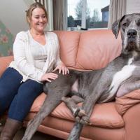 [WTF] Voici Freddy, bientôt le plus grand chien du monde (VRAIMENT très grand)